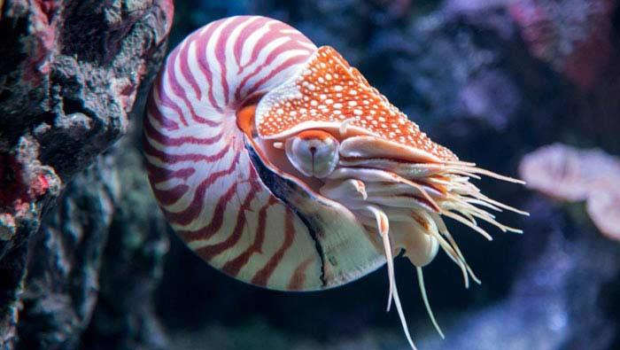 Топ 10 Самых древних существ, доживших до наших дней