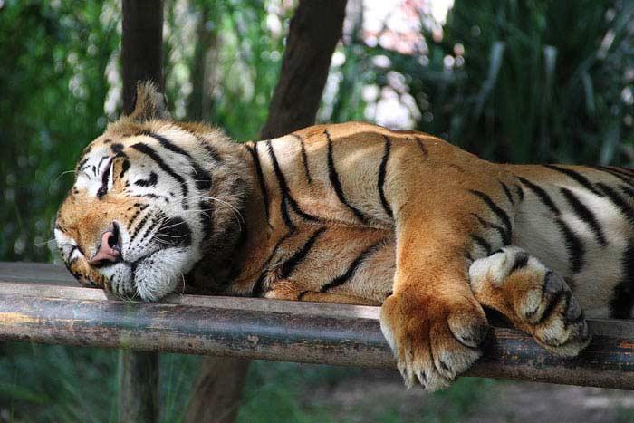 Топ 10 Животных исчезнувших в 20 веке