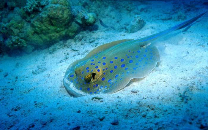Топ 10 Самых опасных морских существ