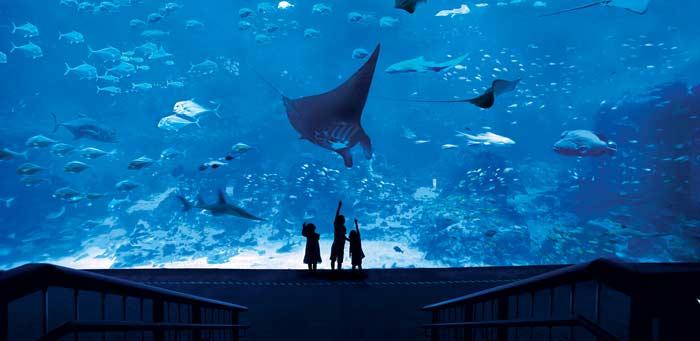S.E.A.Aquarium (Сингапур)