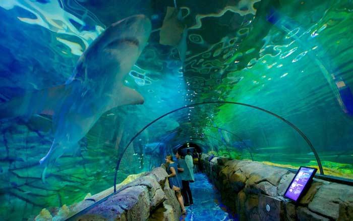 Сиднейский океанариум (Австралия)