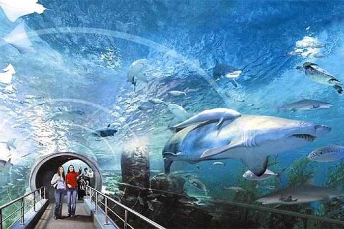 Siam Ocean World (Тайланд)