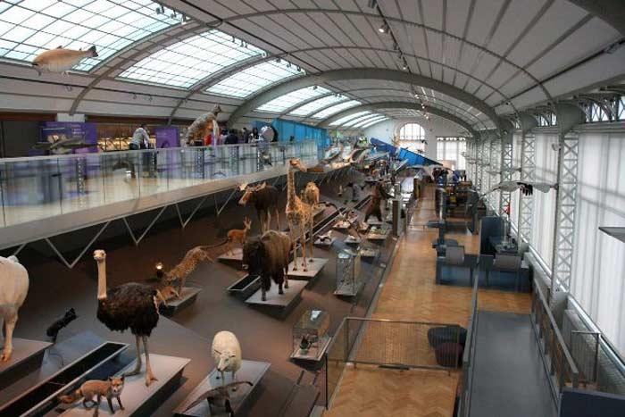 Бельгийский королевский институт естествознания