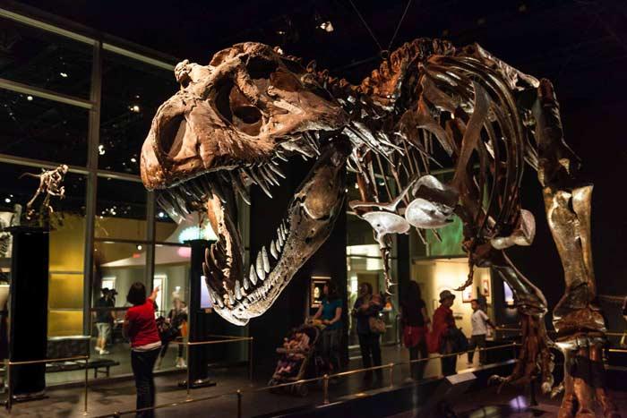 Королевский Тиррелловский палеонтологический музей