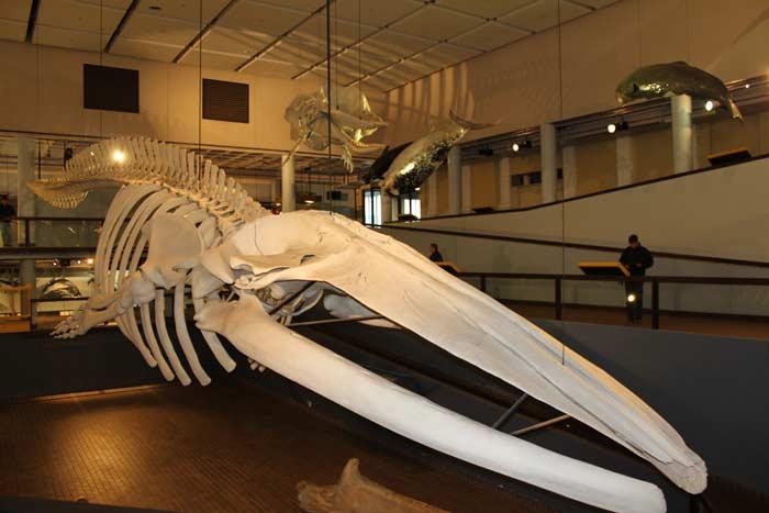 Южноафриканский изико-музей