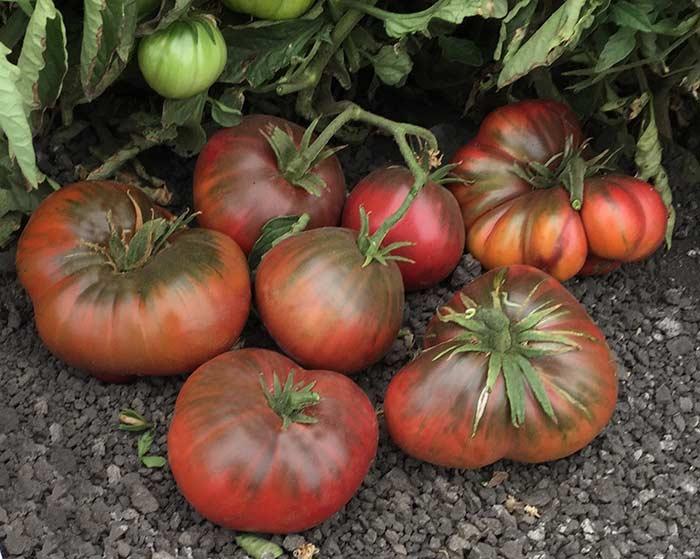 Топ 10 Самые большие помидоры