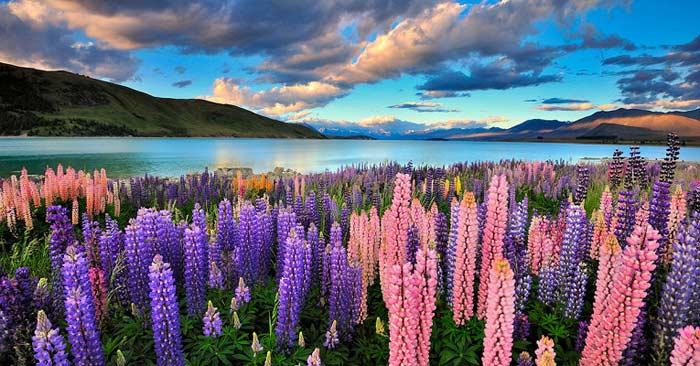 10 Интересных фактов о Новой Зеландии