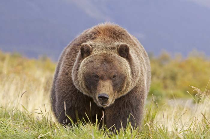 Топ 10 Самых больших медведей