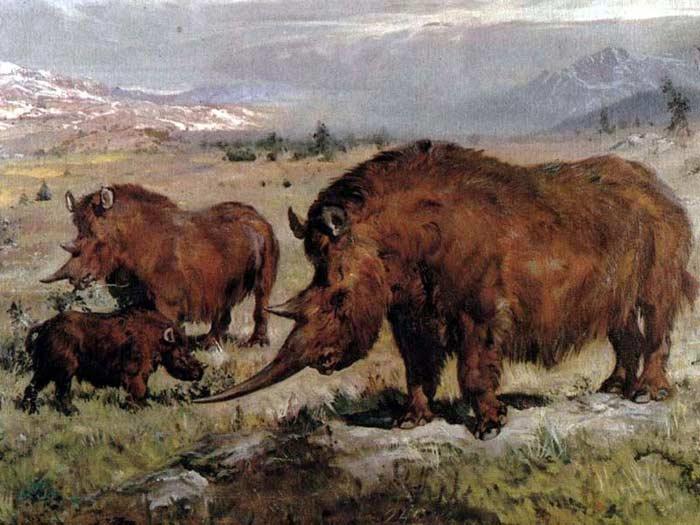 Шерстистые носороги