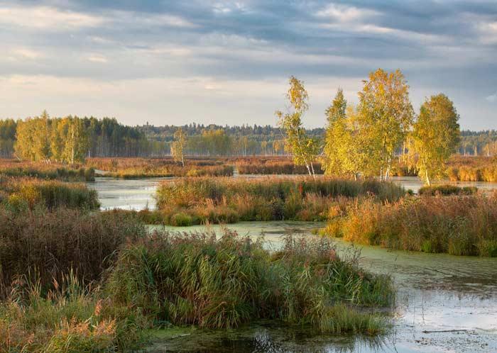 Парк Лосиный остров (Москва)