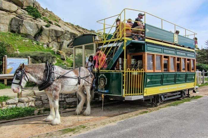 Конные трамваи в Австралии