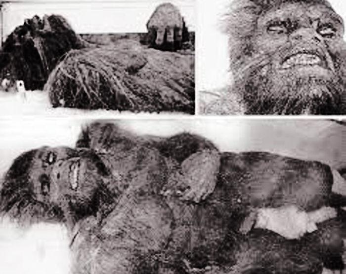Bukit Timah Monkey Man