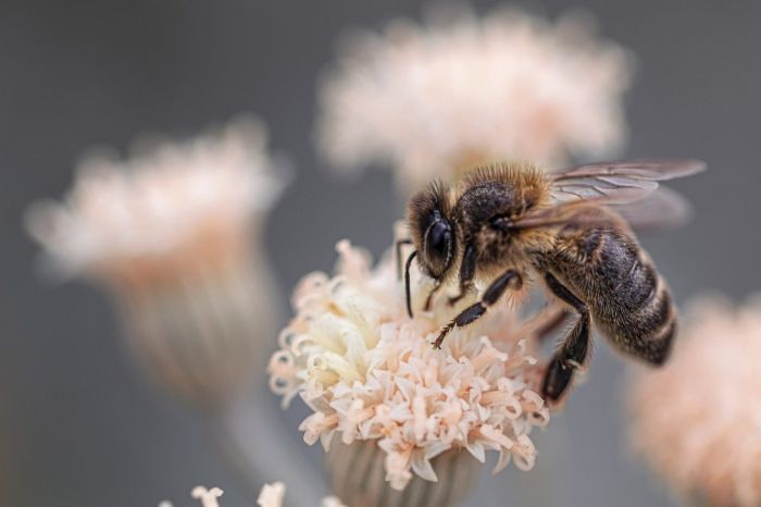 Карта разнообразия пчёл